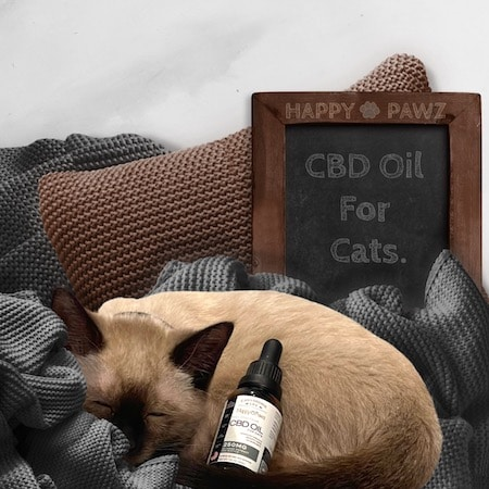 Siamese Kitten Taking Happy Pawz Cbd Oil For Cats