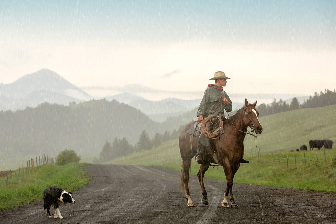 How to Buy CBD Products In Montana