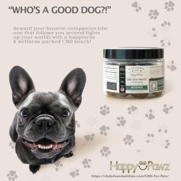 A Happy Smiling Grey French Bulldog Eating Happy Pawz Cbd Dog Snacks